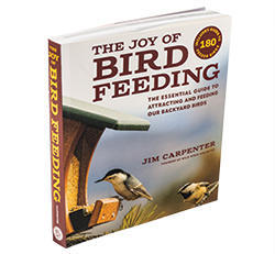 The Joy of Bird Feeding